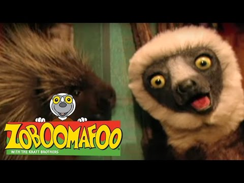 Zoboomafoo 118 Feeling Good Full Episode Kids Tv Shows