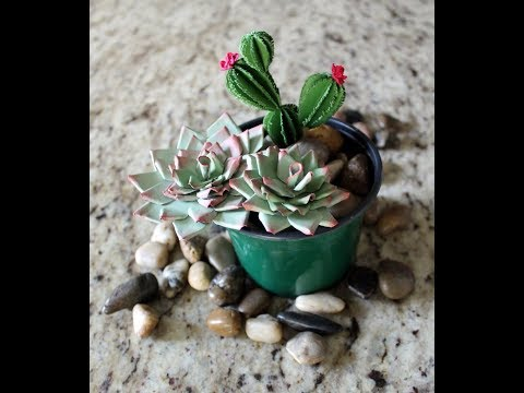 Succulents and Cactus Making by Archana Joshi