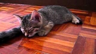 ペシペシすり~ん!熟練した母猫は尻尾を使いこなし子猫を眠りに落とす技を発動