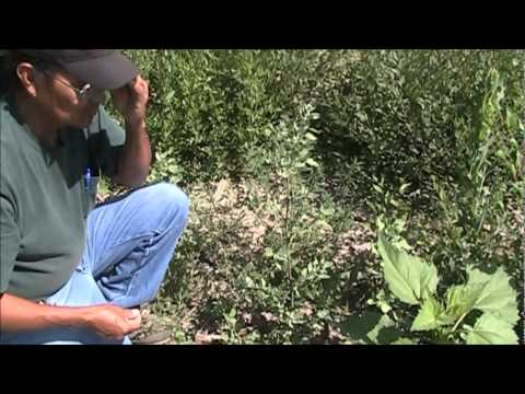 Medicinal plants on the Jicarilla Apache reservation 2011