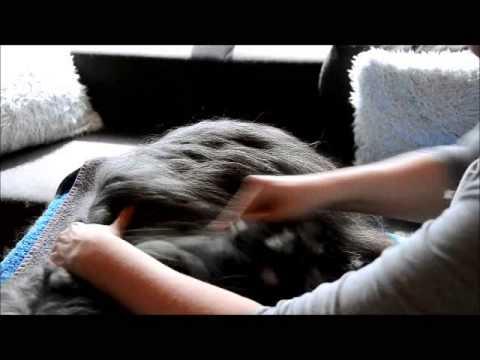 "Technik-Video ""Unterwolle auskämmen"" (Hakel-Methode)"