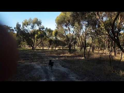 How to Find Old Victorian Era Australian Sanitary and Rubbish Dumps - Nice Vintage Car Find