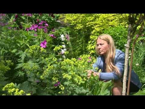 Jardin de Normandie : Le Jardin Retiré