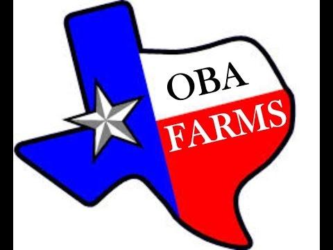 Goats For Sale - Organic Livestock - Greenville, Texas - Chicken - Ducks- Turkey