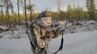 Black grouse hunting in Sweden