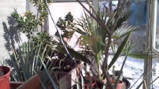 7 Cz.1 Szklarnia przydomowa ze starych okien dla roślin