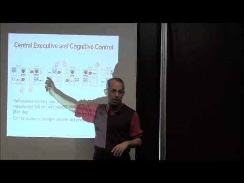 Chapter 9: Working Memory and Cognitive Control