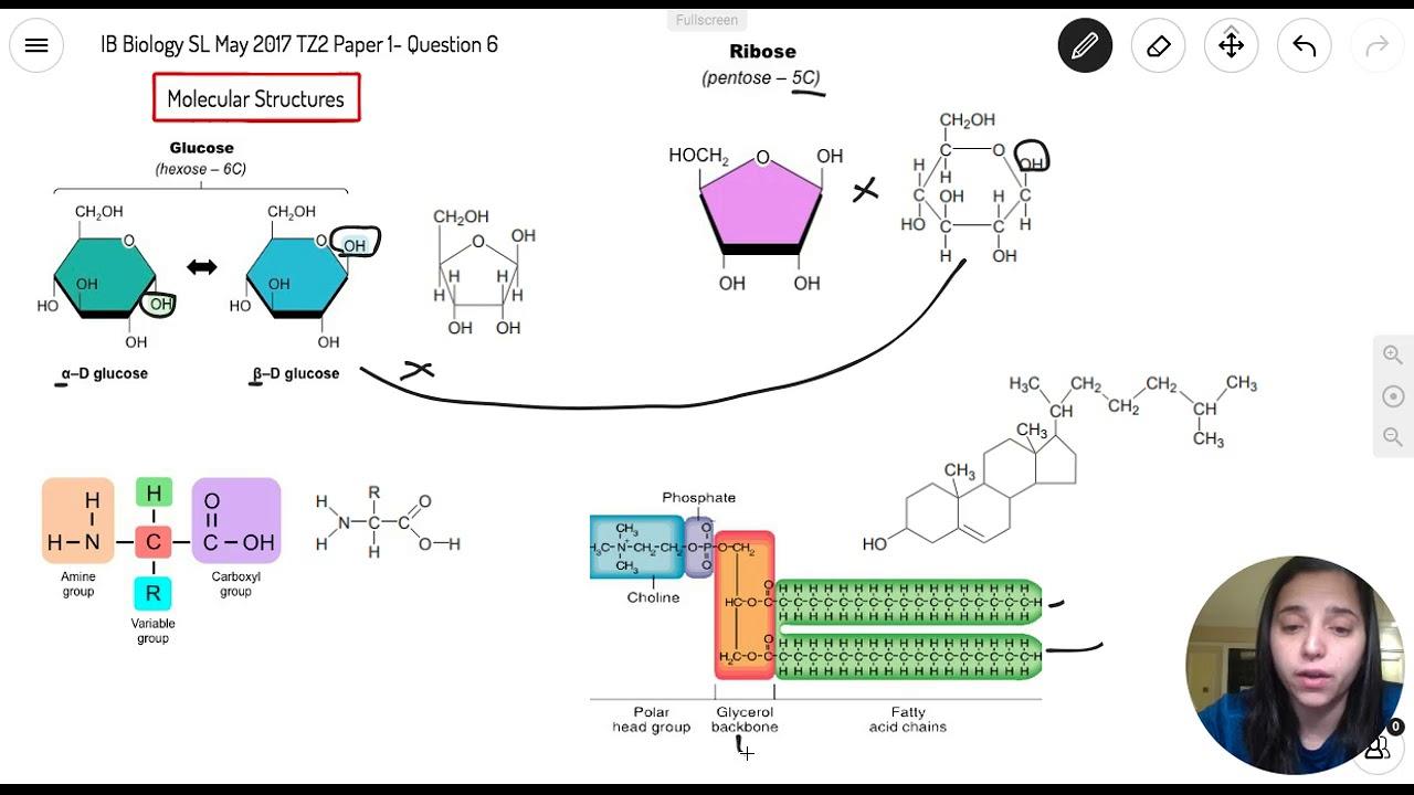 Question 6 — IB Biology SL — May 2017 TZ2 Paper 1 — Past IB Exams Solutions