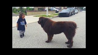 外に出た子供を巨大な2匹の犬が出迎えました。犬たちの目的は?
