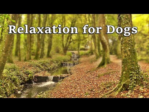 TV for Dogs : Calming Videos for Dogs - Dog Relaxation for Separation Anxiety - Autumn Stream