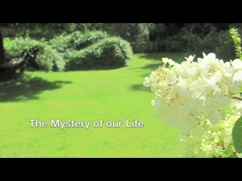 The Mystery of our Life
