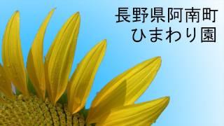"""Big Sunflower garden at Annan-town Nagano pref.It call """"Yaramaika S..."""