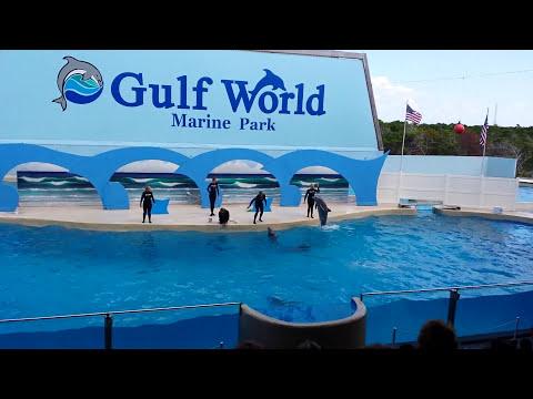 Gulf World Dolphin Show