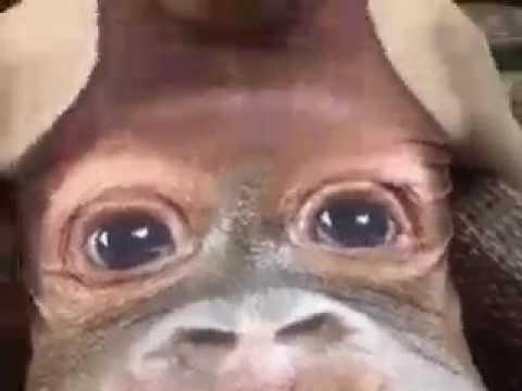 Comedy form monkey t shirt