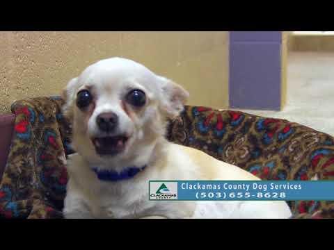 Adoptable Dogs in Clackamas County: Sept. 19 - Sept. 26