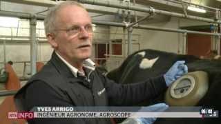 En Suisse, certaines vaches sont équipées de ... hublots!