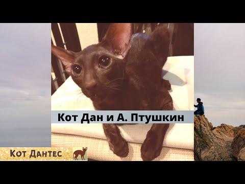 Кот смотрит ТВ,  веселый кот, кот-киноман,  кот Дан, ориентал
