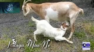 Apne Maa Baap ka Tu Dil na Dukha || whatsapp status video created by Shahid mirza