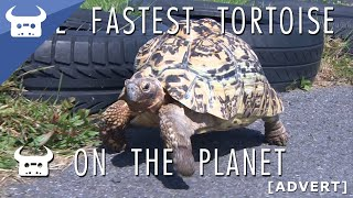 THE FASTEST TORTOISE ON THE PLANET | Dan Bull