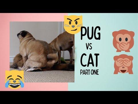 Pug Humping