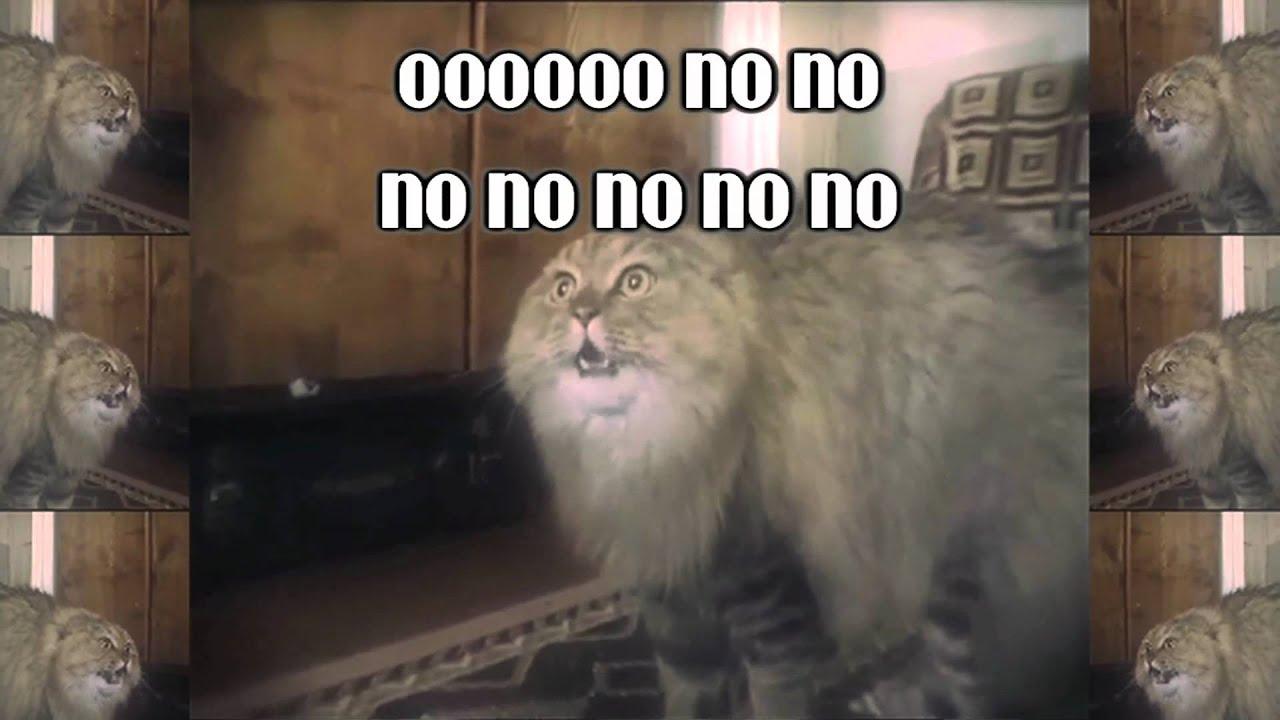 NONONONO Cat (Jake Benson Remix) - YouTube