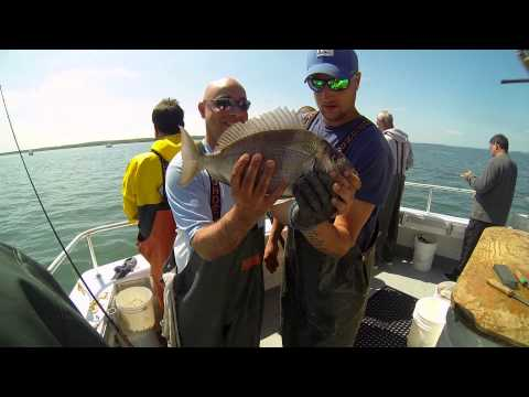 Hampton lady t v peconic fluke for Hampton lady fishing
