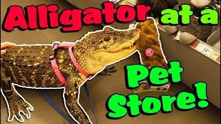 my-alligator-picks-out-a-new-toy-at-the-pet-store