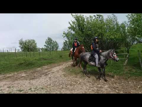 Horse riding in Romania it's a real pleasure!