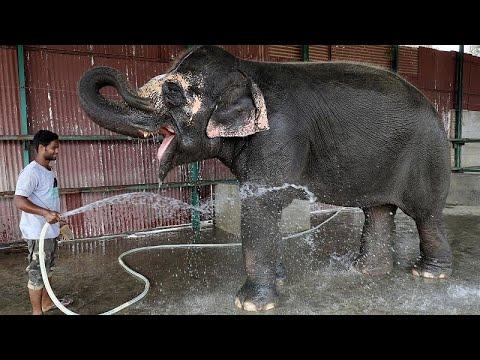 شاهد: أول مستشفى للفيلة في الهند  - نشر قبل 3 ساعة