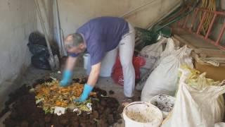 Solucanlar için Kompost mama hazırlama