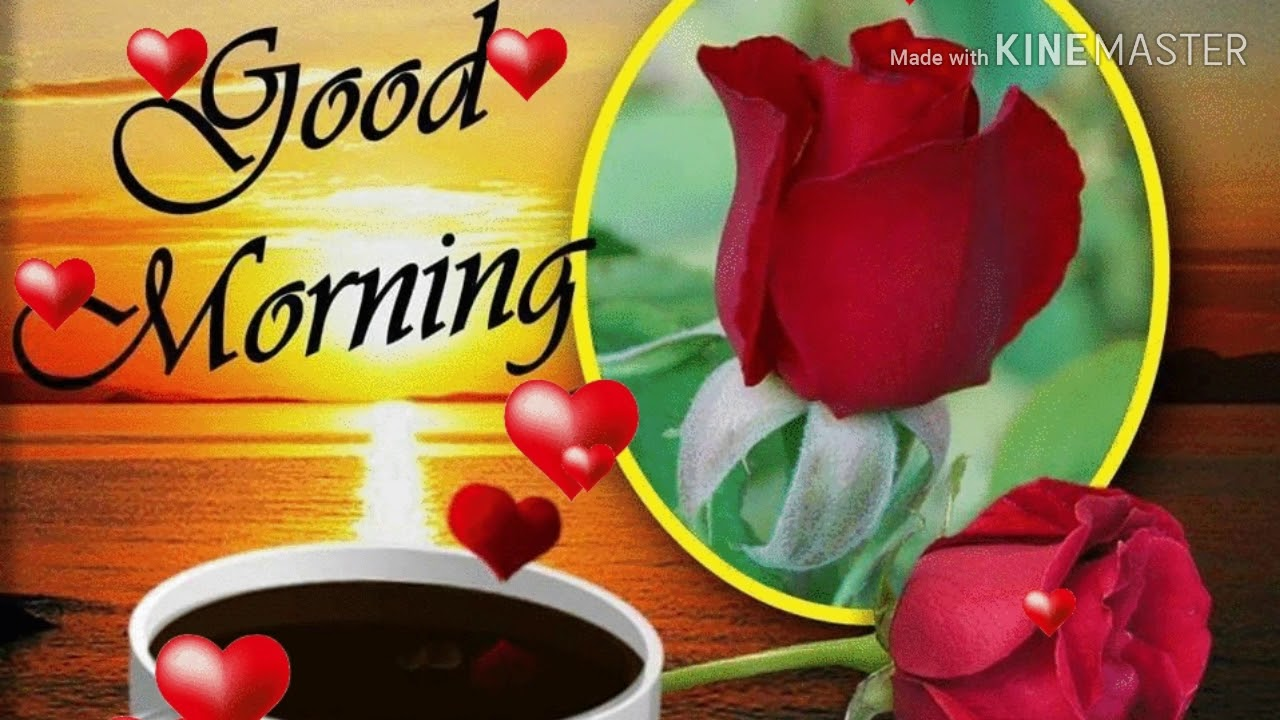 Very Good Morning Love Birds Status Youtube