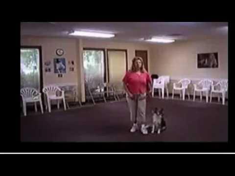 ***'TRAIN a DOG to POTTY'|'PUPPY Potty Training:Tips101|'FREE-Mini-Course'***
