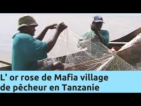 L' or rose de Mafia village de pêcheur en Tanzanie - Thalassa Documentaire