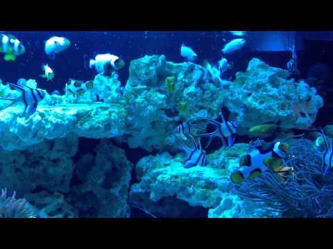 CFC X Tank Feeding Raw Seafood...