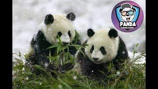 Polina&Alena 8 years (Panda crew) kids Music: Problem - Betta Watch Yo Self