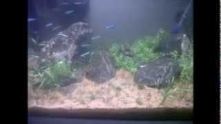 Nano aquarium 2 weken oud