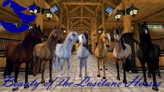 Beauty of the Lusitano Horses ~ Star Stable Online
