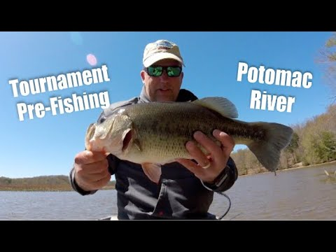 Bass Tournament Pre-Fishing In Aquia Creek - Potomac River