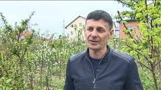 Врожай 2019: прогнози садівників...