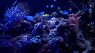 Aquarium Designs Unlimited 1000 Gal Fish Tank Night View