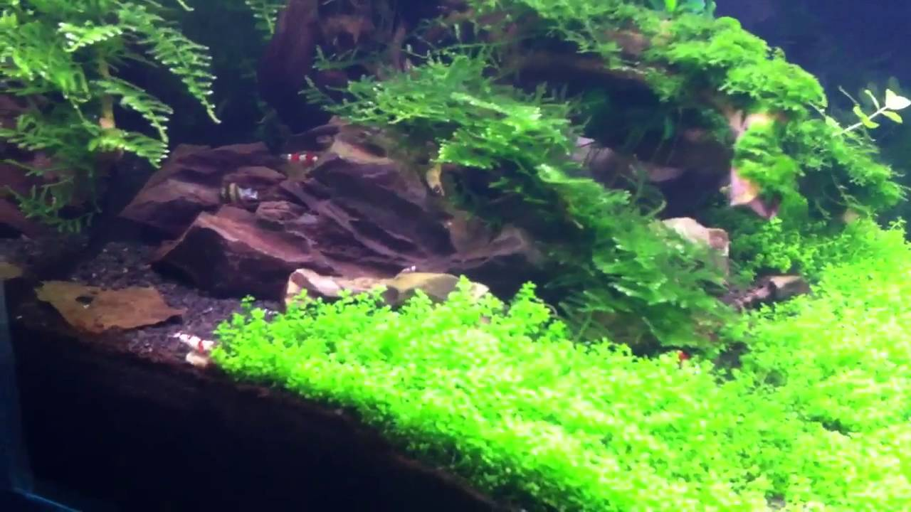dennerle nano aquarium 30l aquascaped tank with shrimps youtube. Black Bedroom Furniture Sets. Home Design Ideas