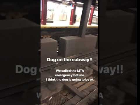 How Jake The Dog Was Saved From The Subway Tracks - Gothamist
