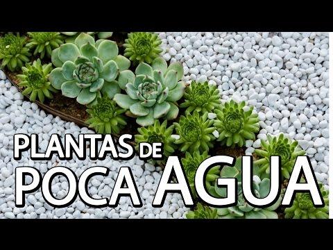 Plantas de Poca Agua