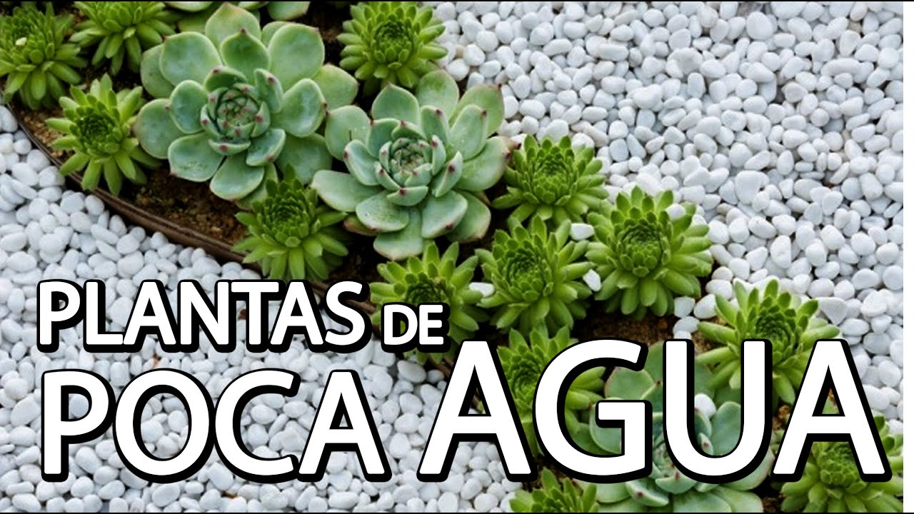 Plantas de poca agua youtube for Plantas de interior fotos