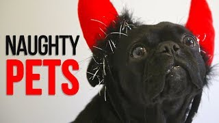 Funniest Naughty Pets Compilation 😍😀- Try Not To Laugh.