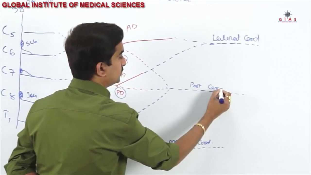 Brcahial Plexus part - 1 ( usmle video lectures ) - YouTube