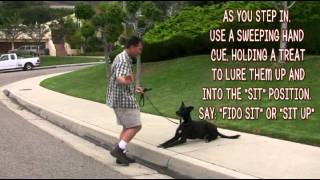 Dog Training -down To Sit-