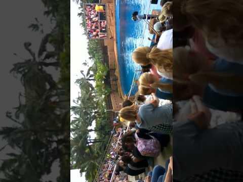 Dolphin Show in Ushaka Marine world Durban
