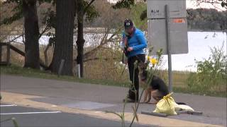 Skylar (german Shepherd) Dog Training Video Minneapolis
