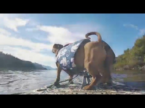 Dogs' days off - cute dog video on the water, SUP dogs, surfing Dog Beach with Surf Dog Diaries